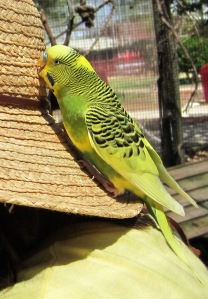 Bird eating my hat at the Gulf Breeze Zoo near Pensacola, Florida