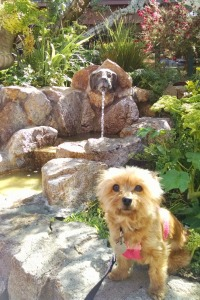 Trixie at the Fountain of Woof, Carmel-by-the-Sea, California © 2015 Patricia J. Angus