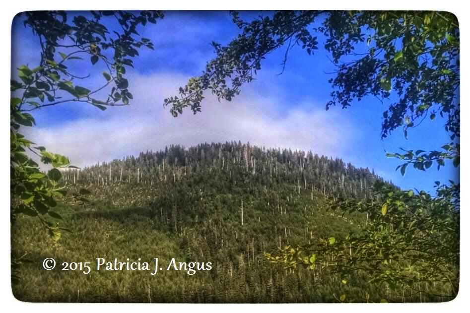 Uplifting Strength (c) 2015 Patricia J. Angus