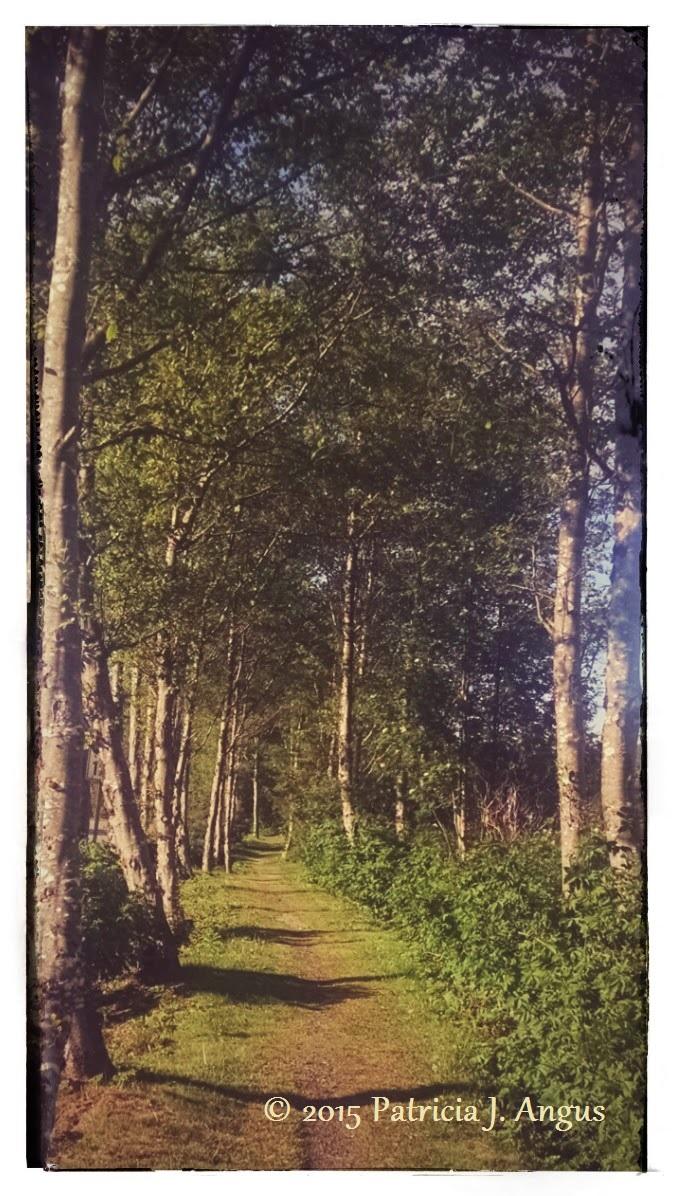 Memory Trail (c) Patricia J. Angus