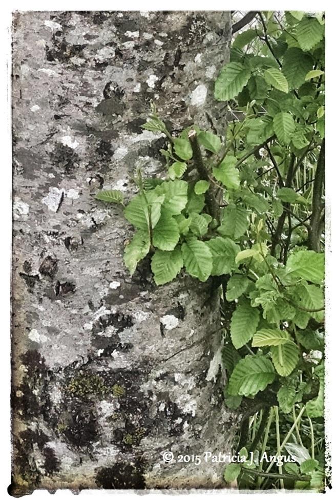 Textured Tree Trunk (c) 2015 Patricia J. Angus