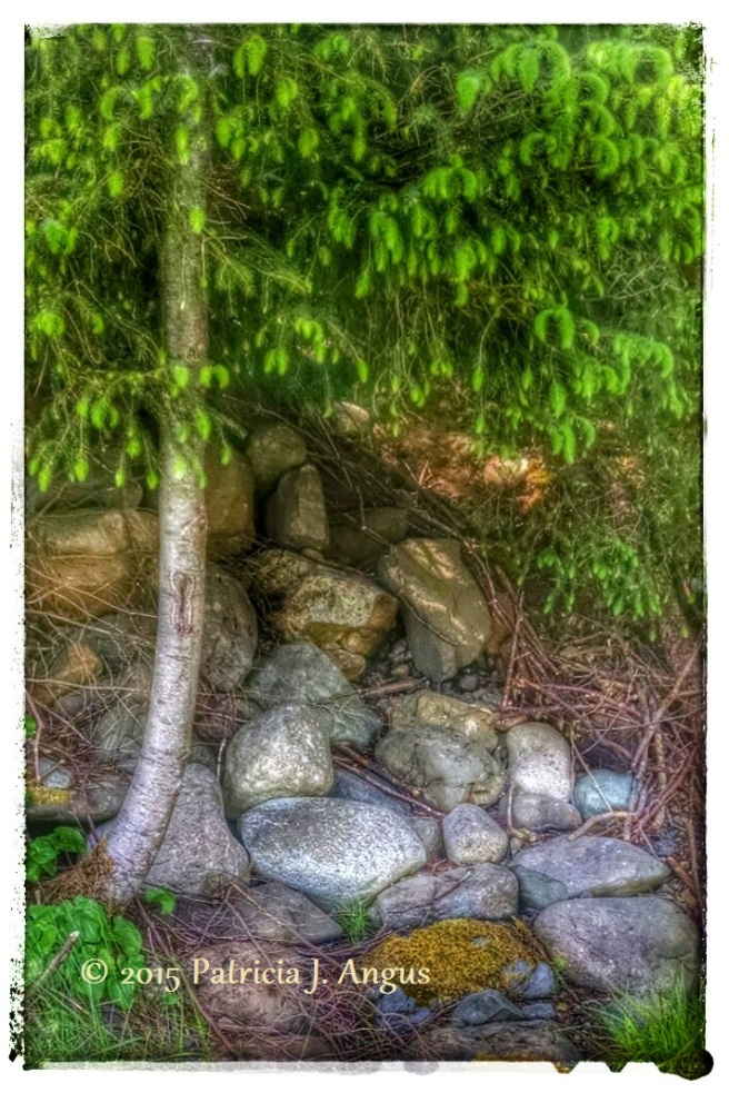Tree with Rocks (c) 2015 Patricia J. Angus