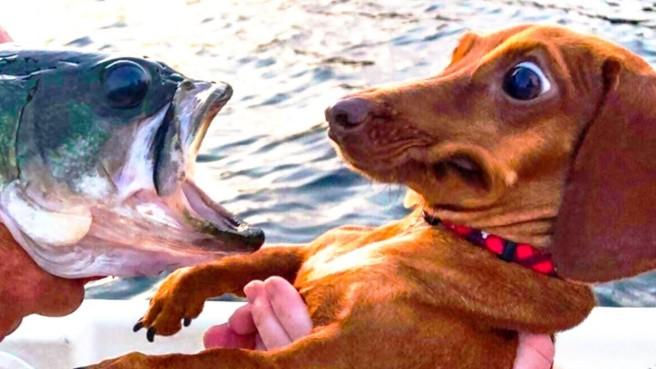 Dog and Fish